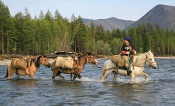 Якутские лошади. Якутия, Лошади, Природа, Длиннопост